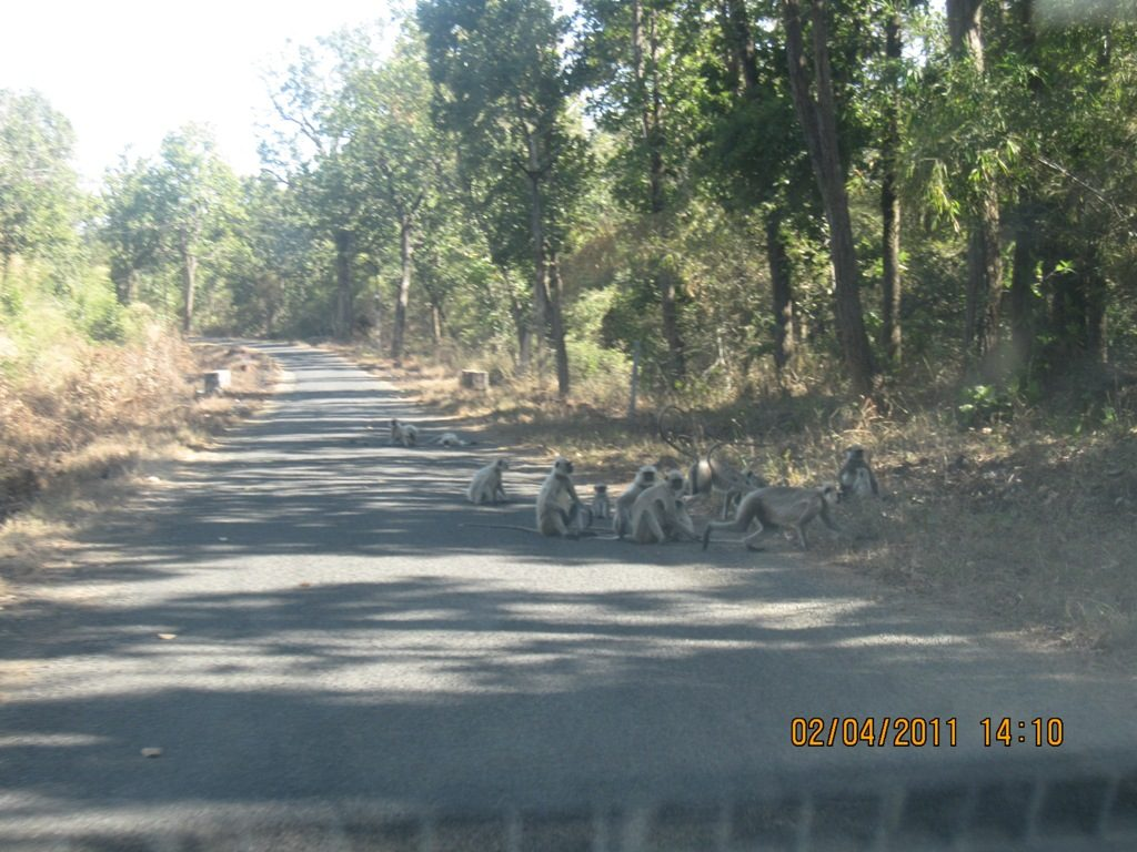 Kanha - Pench Car Trip from Hyderabad (2011) 11