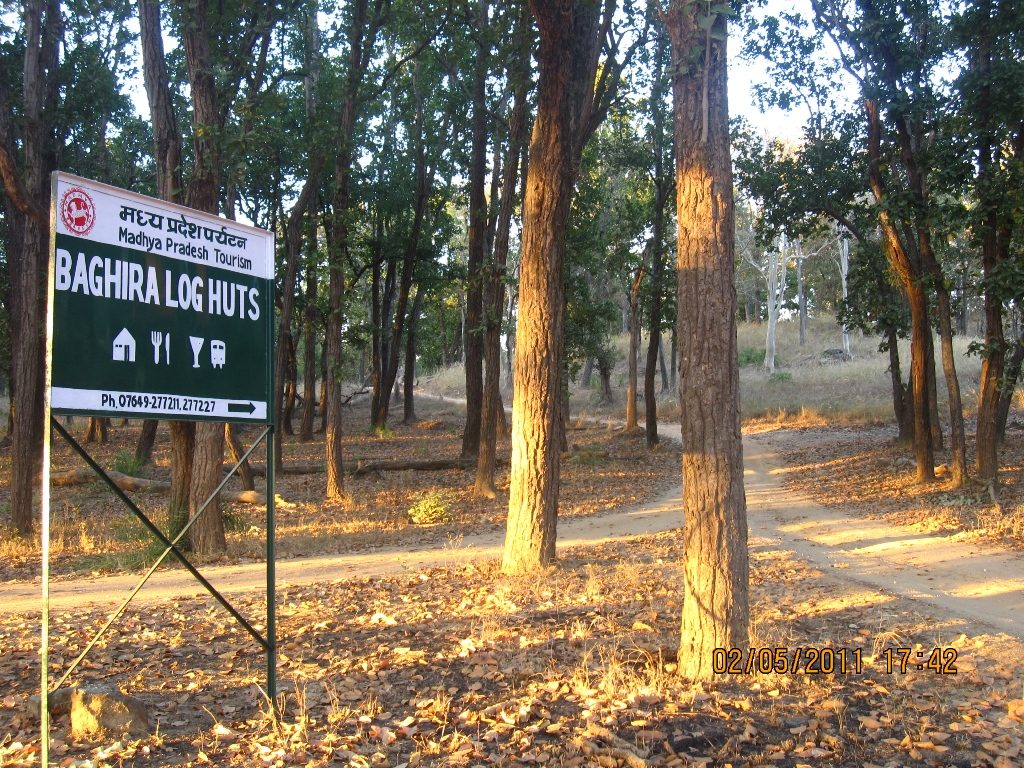 Kanha - Pench Car Trip from Hyderabad (2011) 12