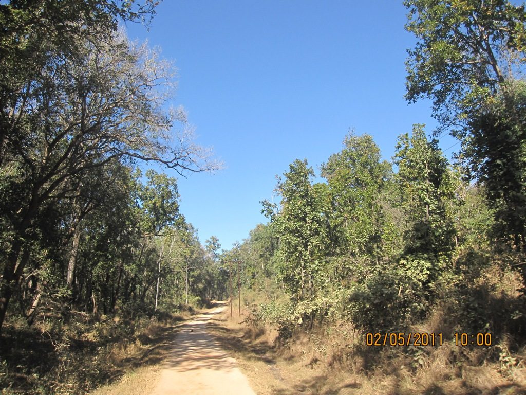Kanha - Pench Car Trip from Hyderabad (2011) 15