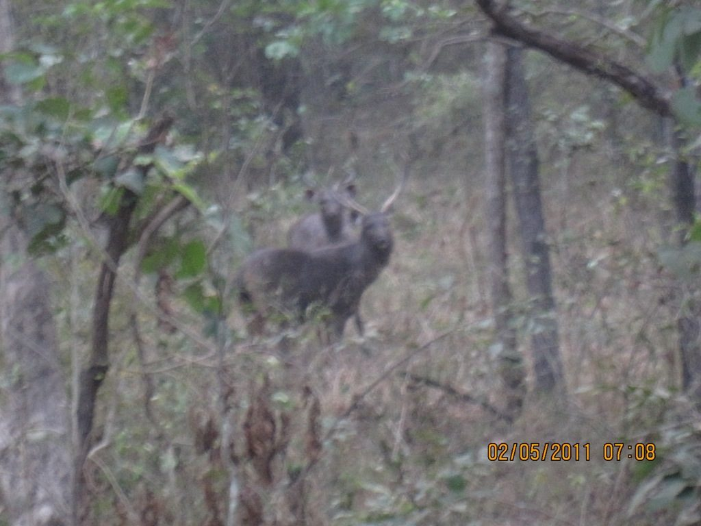 Kanha - Pench Car Trip from Hyderabad (2011) 16