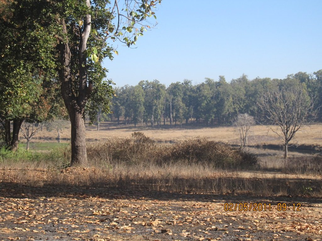 Kanha - Pench Car Trip from Hyderabad (2011) 19