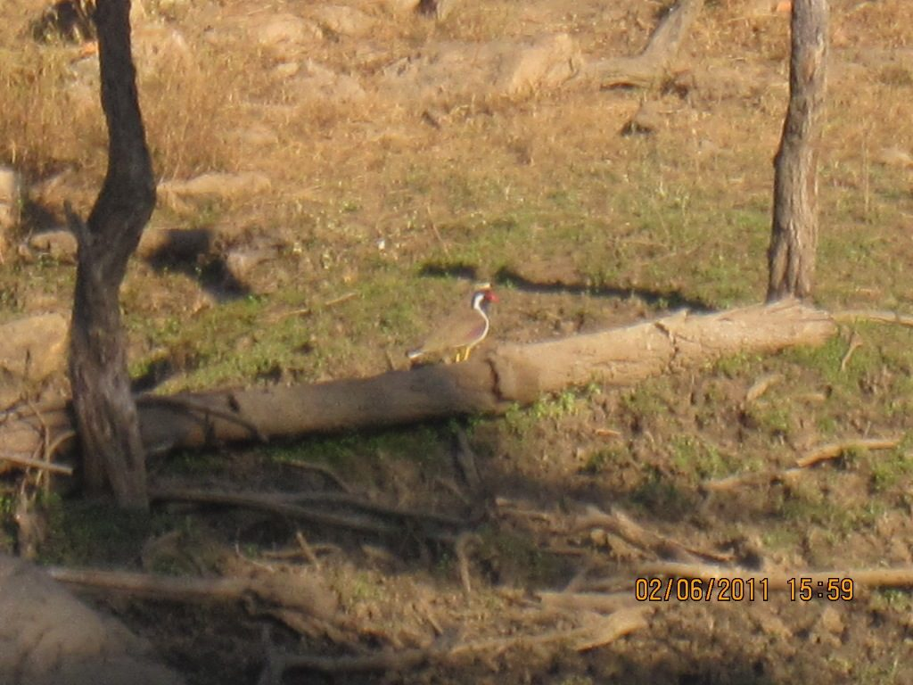 Kanha - Pench Car Trip from Hyderabad (2011) 29