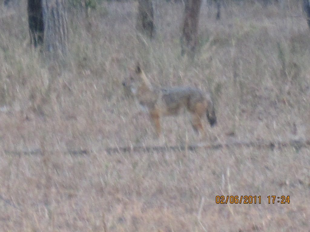 Kanha - Pench Car Trip from Hyderabad (2011) 30