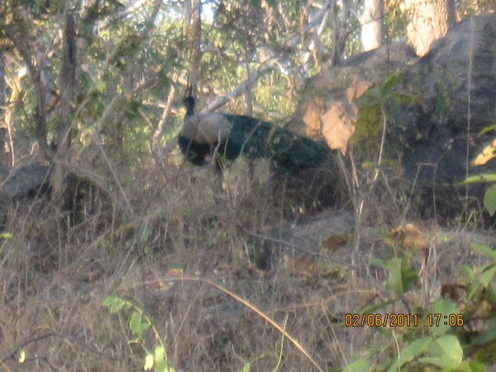 Kanha - Pench Car Trip from Hyderabad (2011) 32