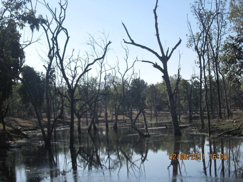 Kanha - Pench Car Trip from Hyderabad (2011) 33