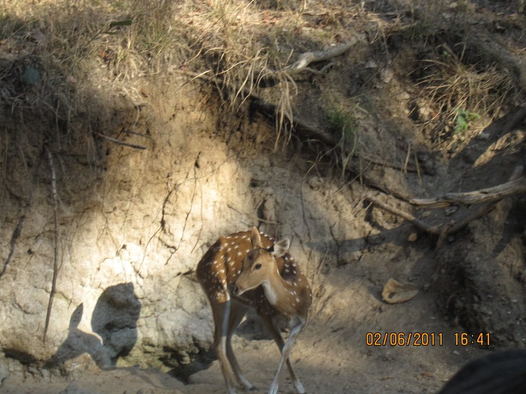 Kanha - Pench Car Trip from Hyderabad (2011) 35