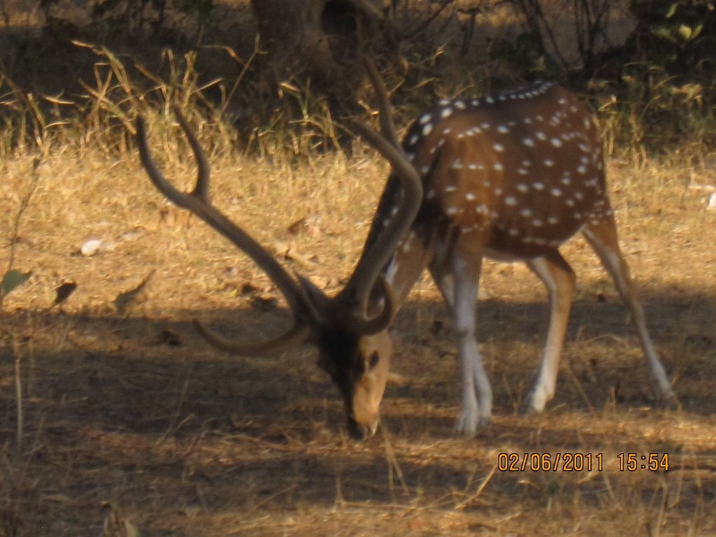Kanha - Pench Car Trip from Hyderabad (2011) 38
