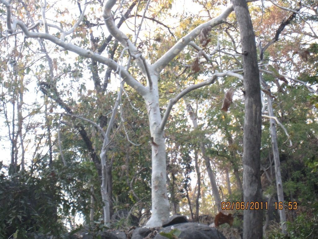 Kanha - Pench Car Trip from Hyderabad (2011) 40