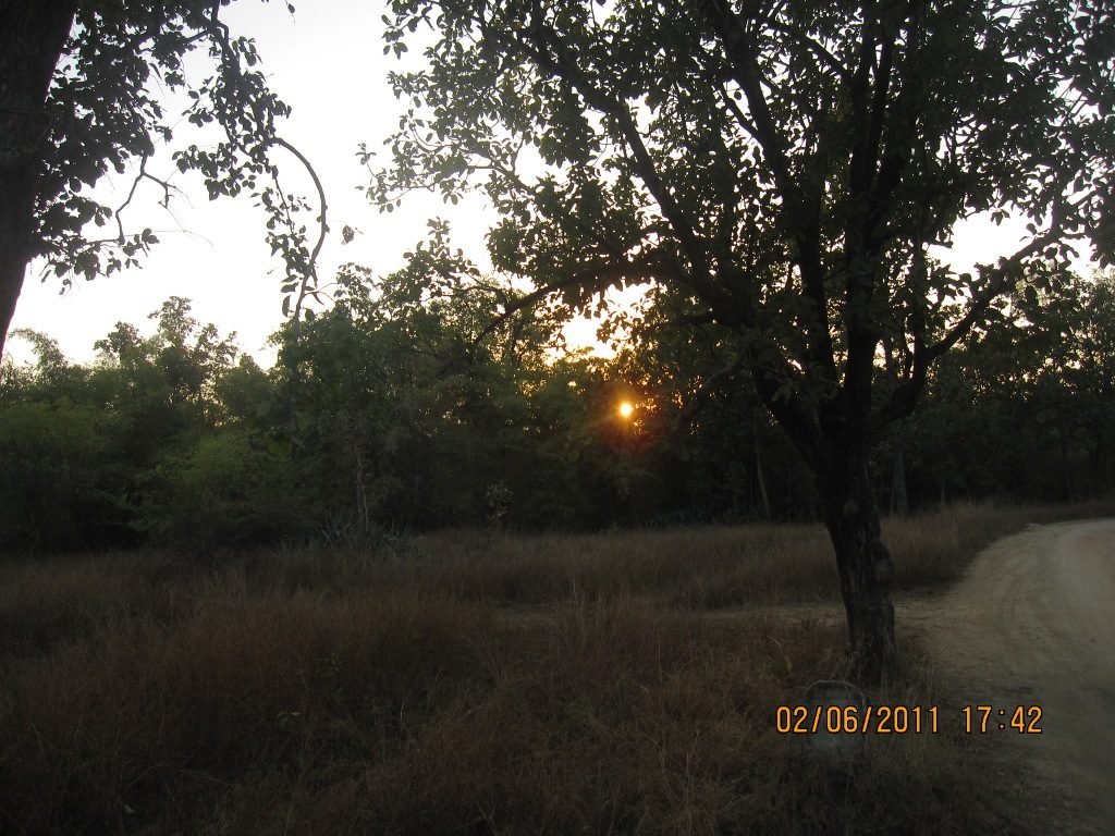 Kanha - Pench Car Trip from Hyderabad (2011) 41